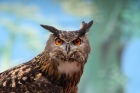 Wise-owl